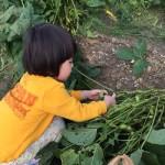 畑を借りて野菜を作りたいブーム