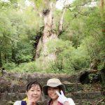 縄文杉からの下山 屋久島その2